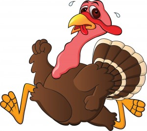 Turkey - Thanksgiving